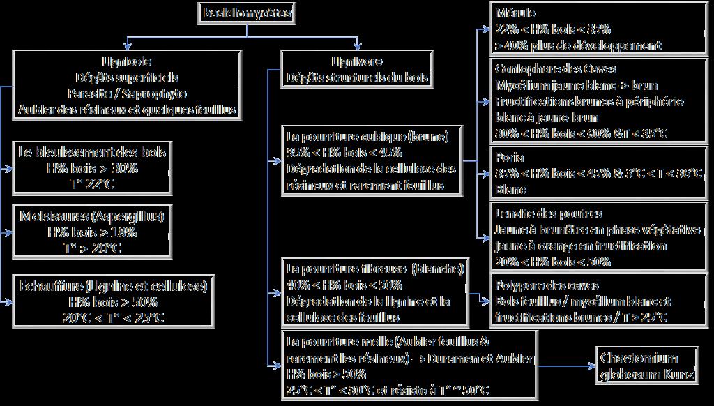 Diagramme des champignons lignicoles et lignivores