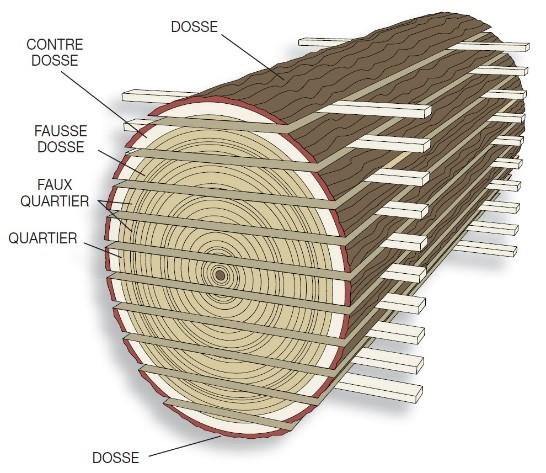 Les coupes dans le bois - Termites