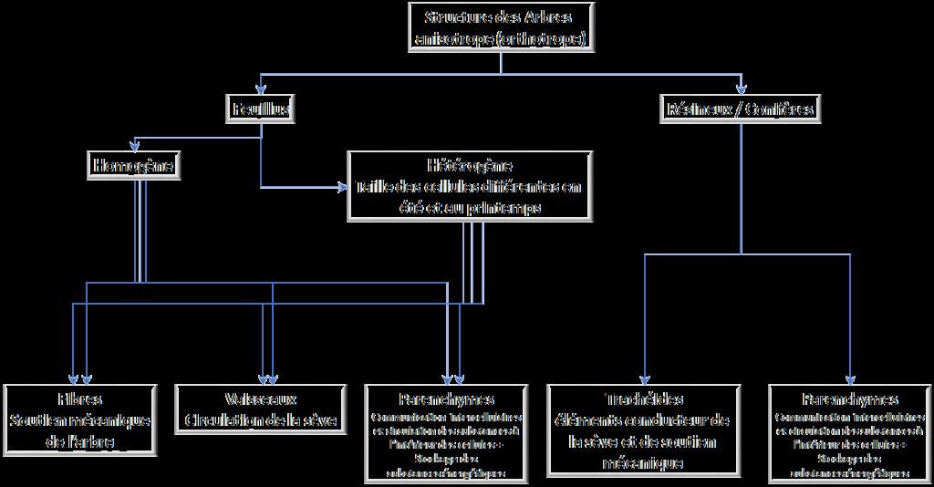 Structures des arbres de type résineux et feuillus - Termites